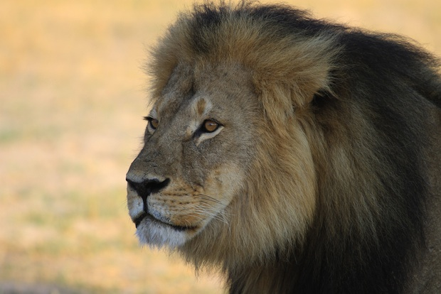 The Selective Outrage Triggered by Cecil the Lion