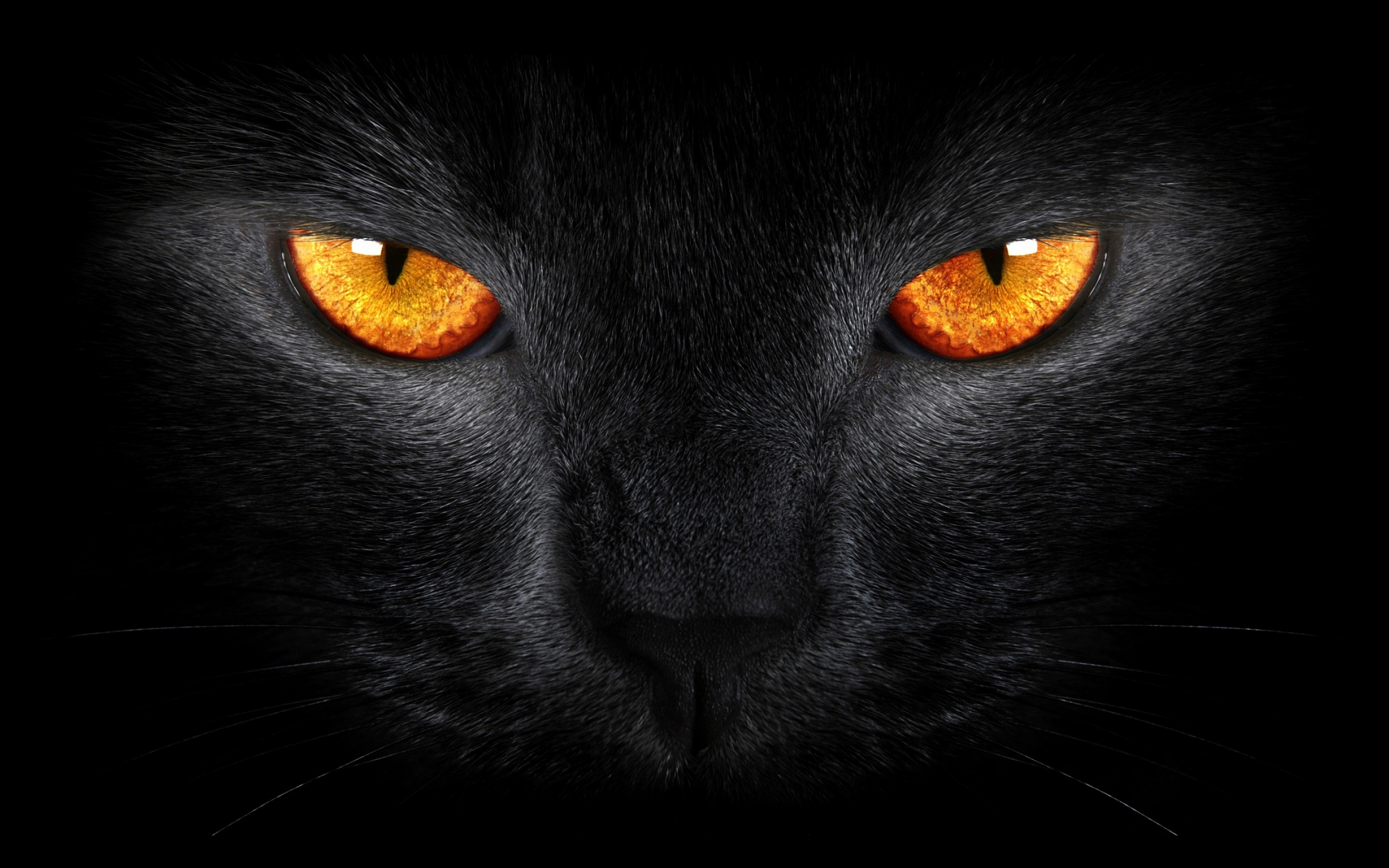 The Demonization Of Cats