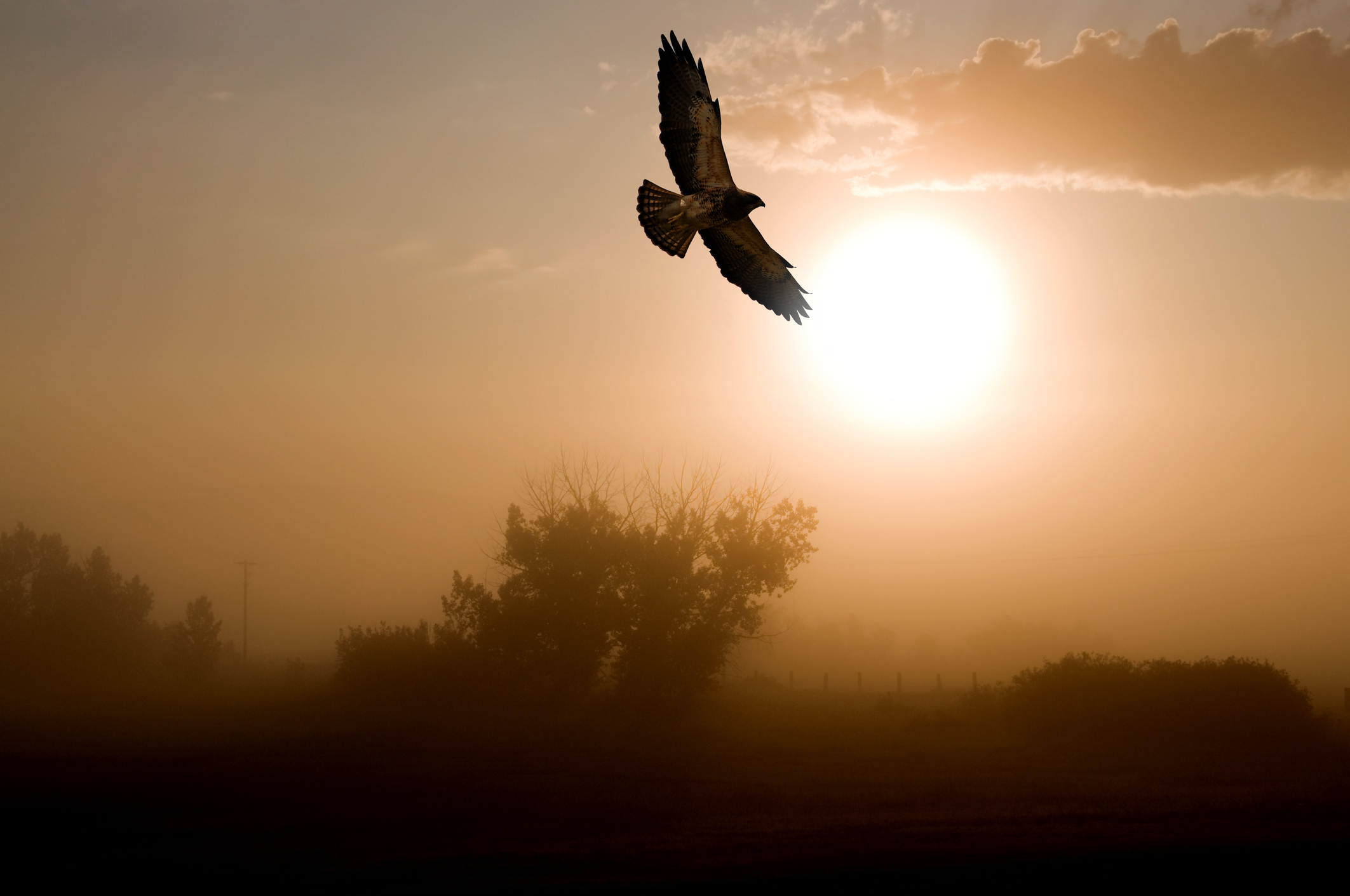 How Visits from A Hawk Helped Me Follow My Heart