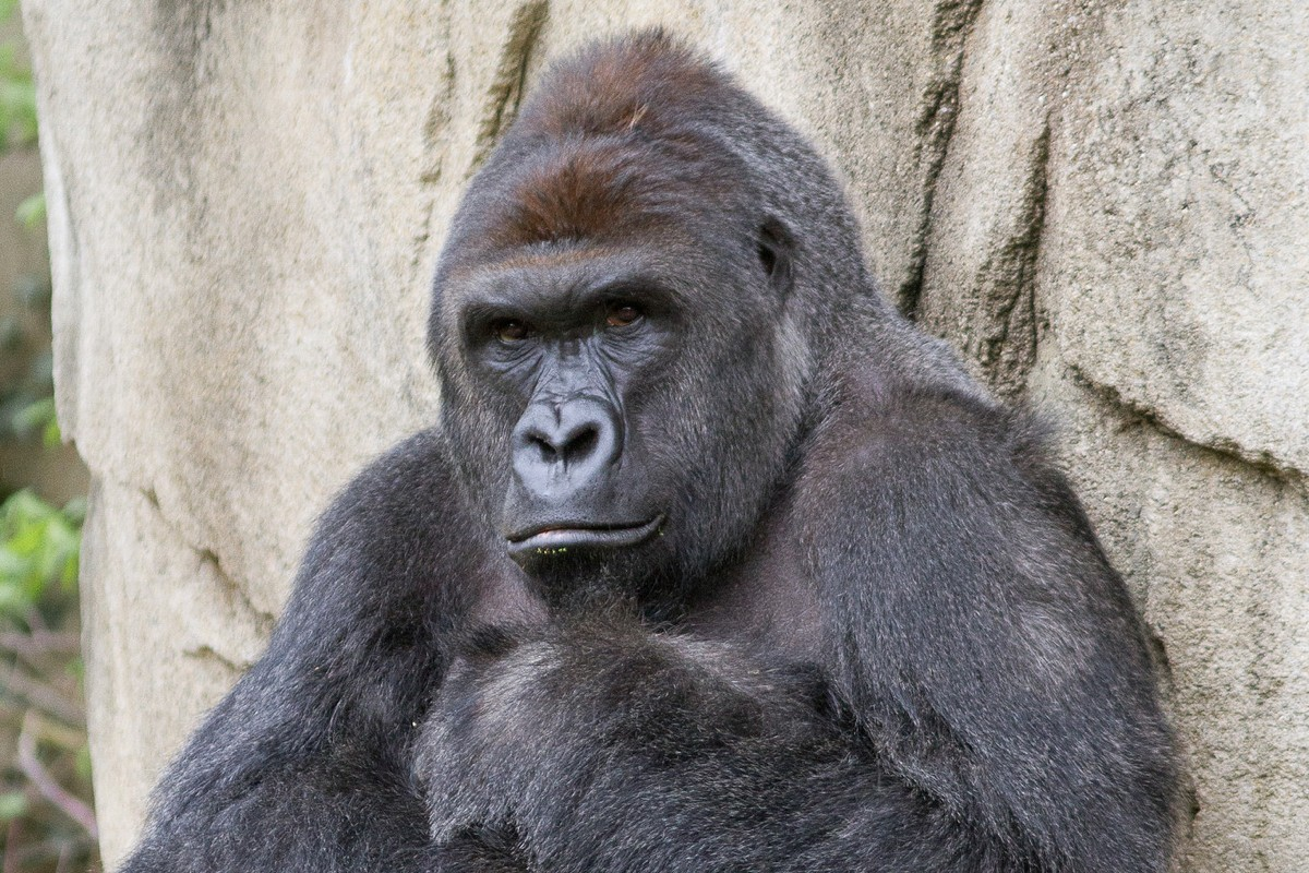 This Isn't Really About Harambe