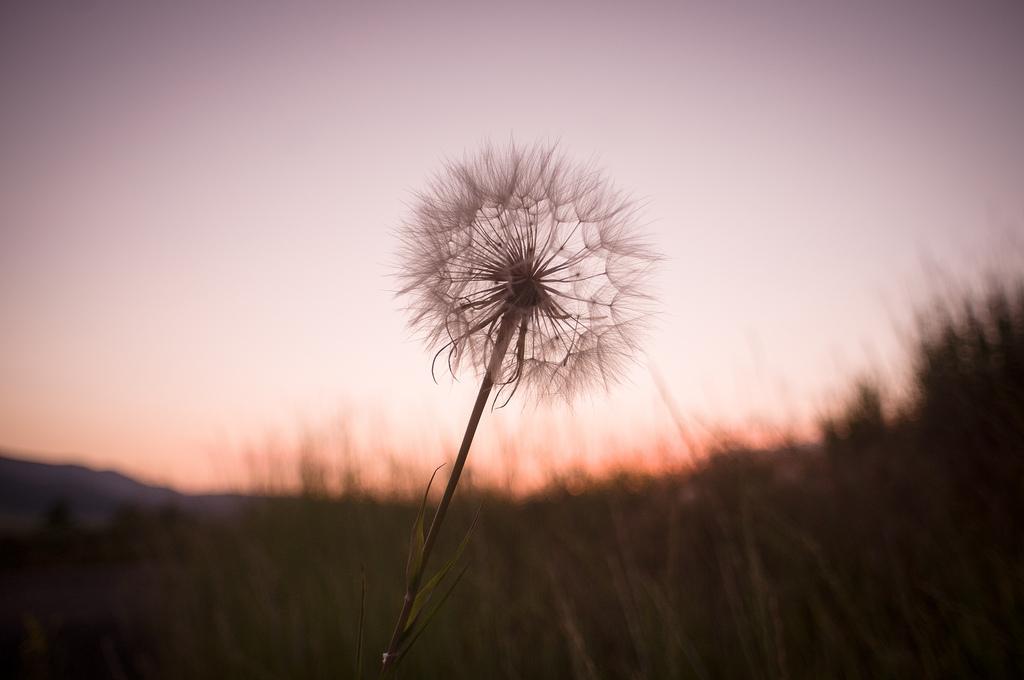 The Seeds Of Change Often Lies Below Our Awareness
