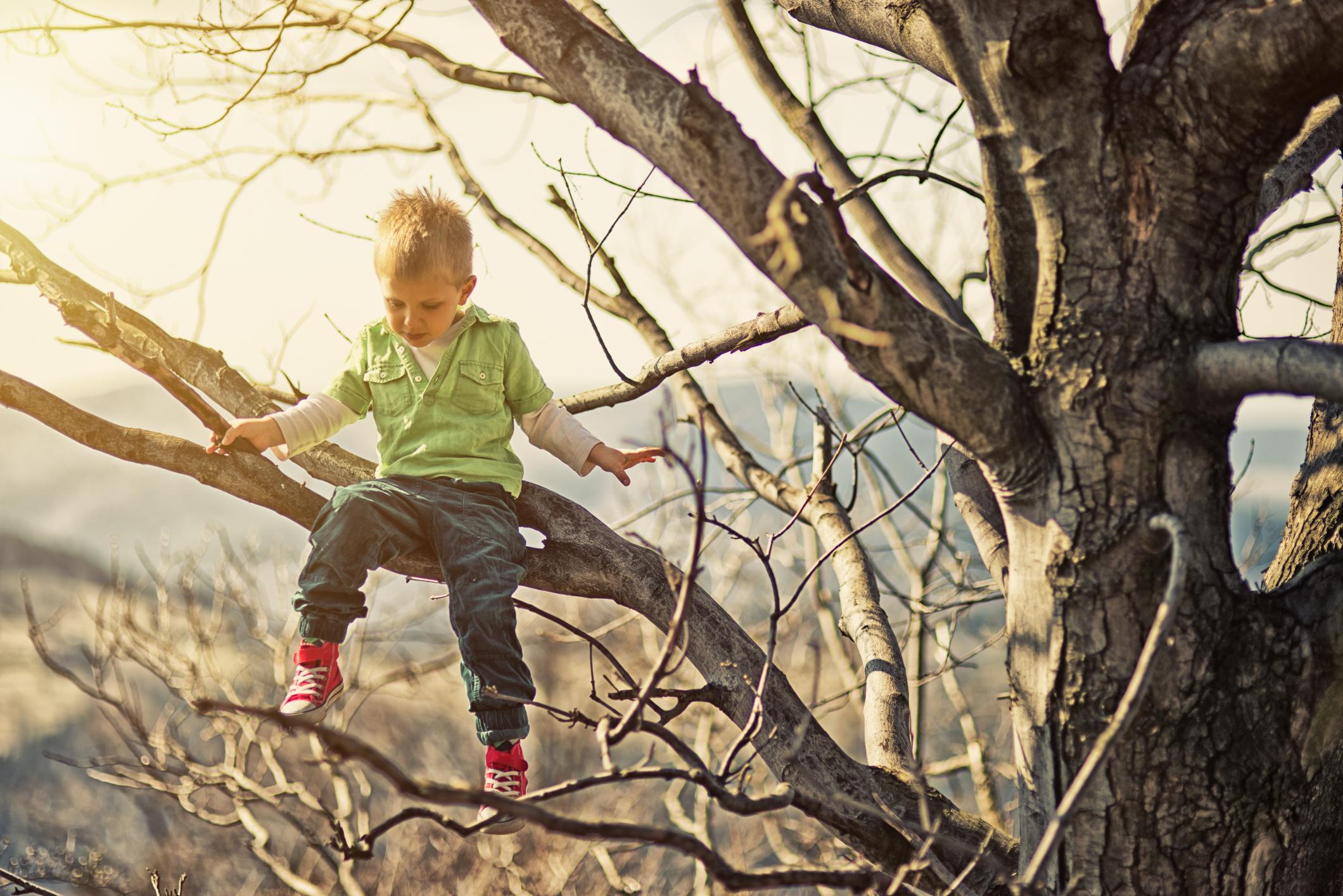 The Reason Kids Climb Trees – The Wisdom Daily